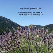 Les montagnes, les oiseaux, les fleurs et les papillons